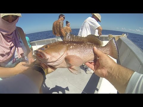 Queen Fleet Charter, Clearwater,FL - NON STOP ACTION