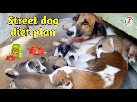 Street dog diet plan / Diet Chart / In Hindi /  Street Dog Best Diet Chart