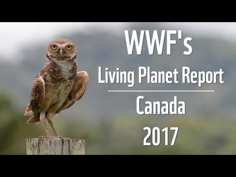 WWF's Living Planet Report - Canada 2017