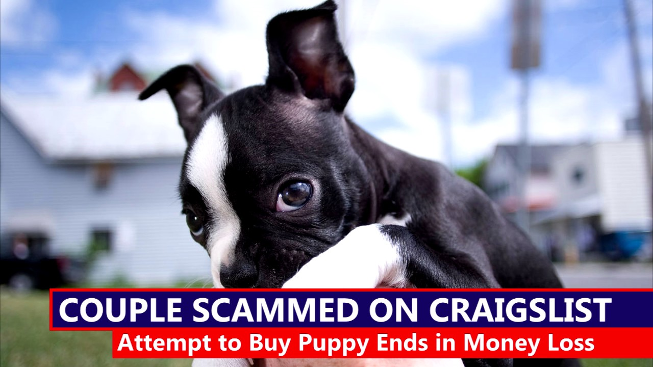 Couple Scammed While Buying Puppy On Craigslist Youtube