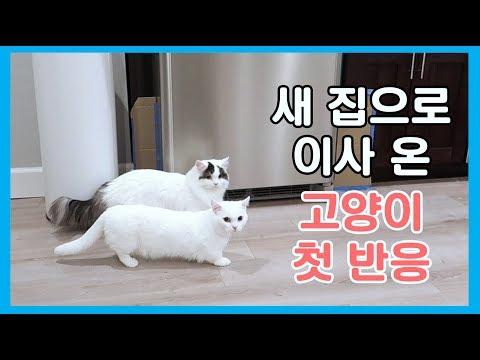 새 집으로 이사 온 고양이 첫 반응!