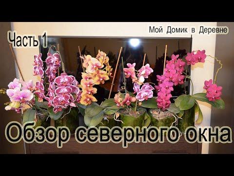 Обзор орхидей с северного окна! Часть 1 ( 05.19)