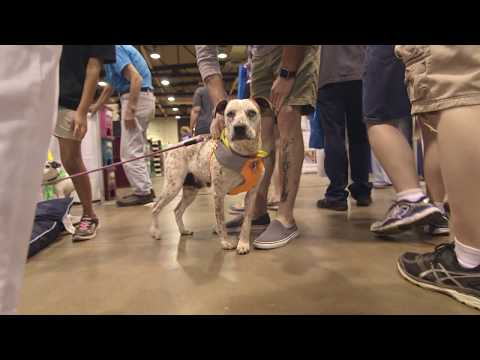 Team Honda Week of Service 2017: Honda of America Mfg. Inc. and PAWS