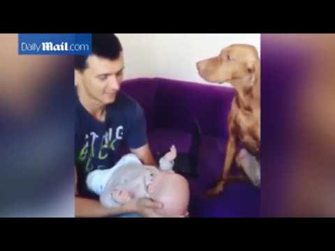 Dog kisses owner every time he kisses his newborn baby    Daily Mail Online