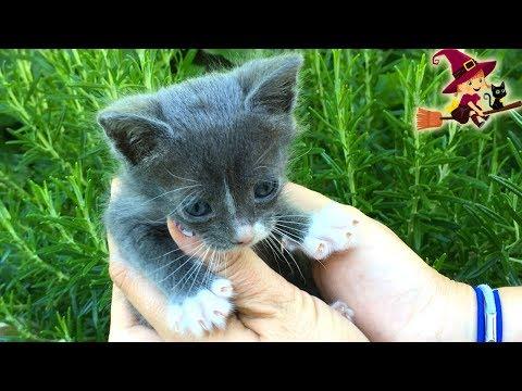 Adorable Gatito de Cuatro Semanas