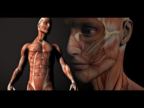 урок анатомии на собственном примере русское видео