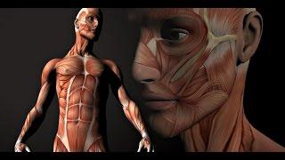 Урок анатомии в колледже США.