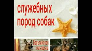 Кличьки для породистых собак