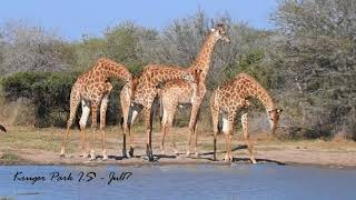 Kruger Park wild life SA