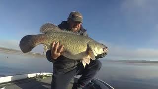 3 years of highlights Murray Cod Golden Perch and Australian Bass
