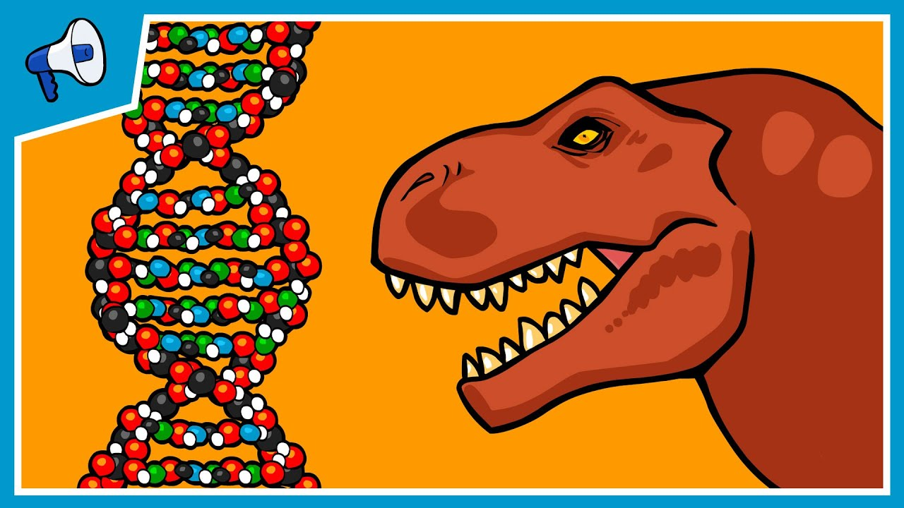 What Is Dna And How Does It Work