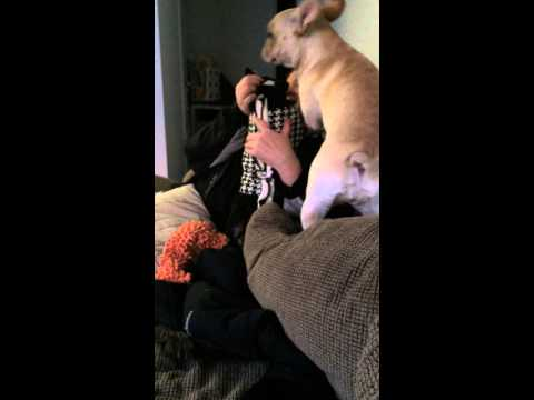 Surprised Mom with a puppy. Best surprise reaction ever!