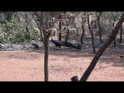 Botswana Gaborone Farm House