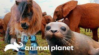 Las liberaciones más conmovedoras   El Dodo: En busca de héroes     Animal Planet