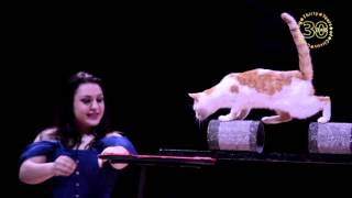 Zippos Circus CELEBRATION 2016 presents Roseline and Nora with their Pussycats