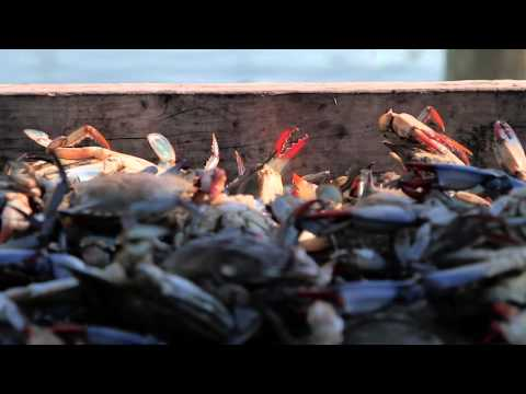 The Human Cost of Seafood Fraud