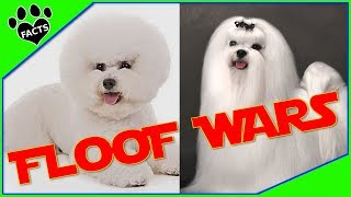Bichon Frise vs Maltese  Dog vs. Dog:Which is Better?