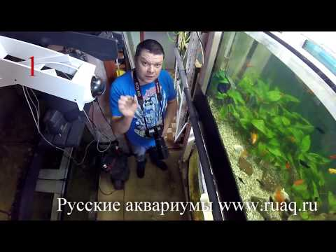Топ 5 лайфхаков для аквариума
