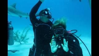 Video Shark Dive Bahamas! download MP3, 3GP, MP4, WEBM, AVI, FLV Agustus 2018