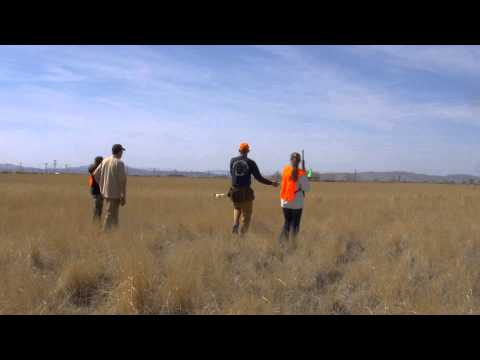 How To Field Hunt Game Birds in Fallon, Nevada
