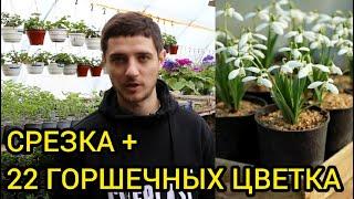 Большой список цветов для выращивания к 8 марта