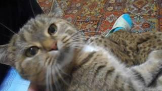 Кошка Ромашка чихает!