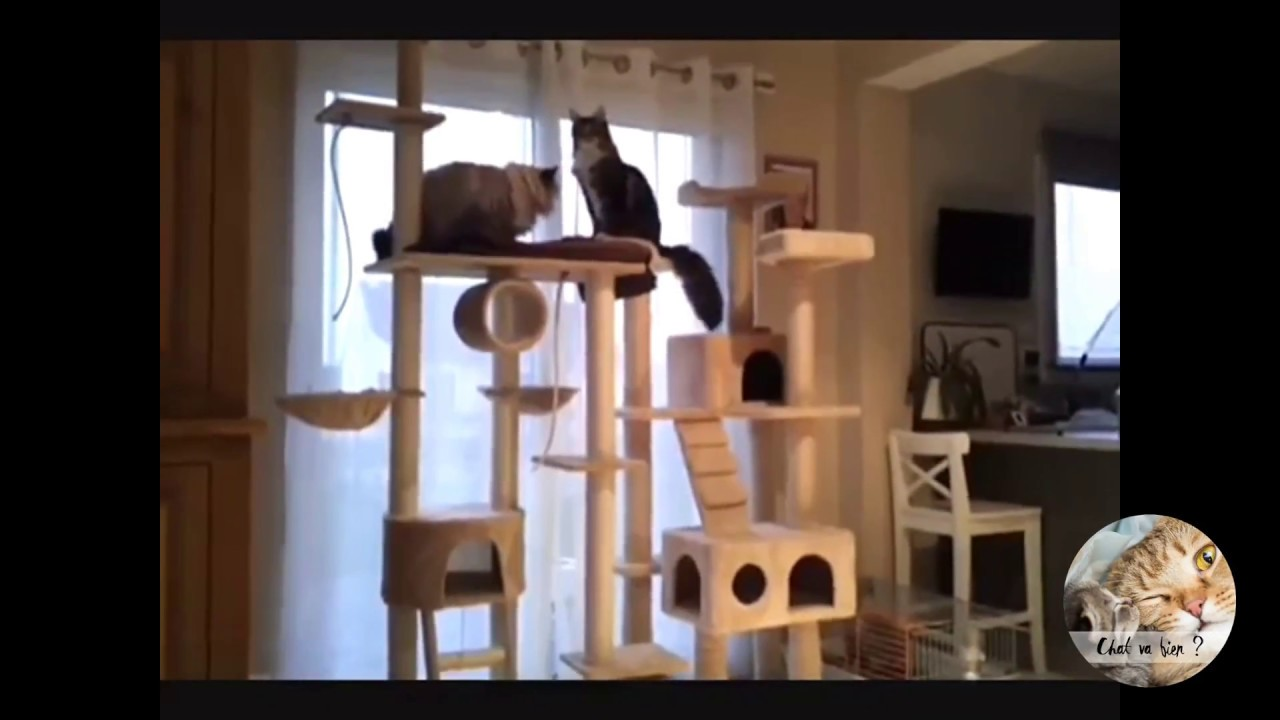 arbre chat g ant pas cher youtube
