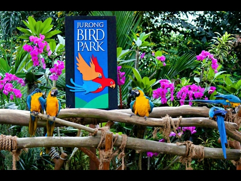 Singapore Travel Day 4 @ Jurong Birds Park part 1