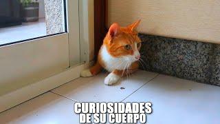 CURIOSIDADES DE SU CUERPO