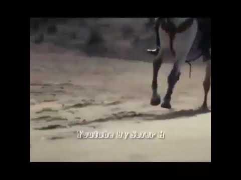 Cümə gününə aid wahtsapp status videosu