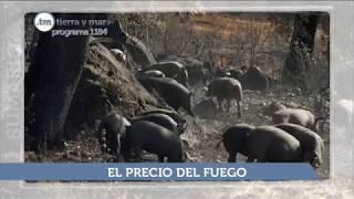 SUMARIO TIERRA Y MAR - PROGRAMA 1184 - EMISIÓN 1.10.17