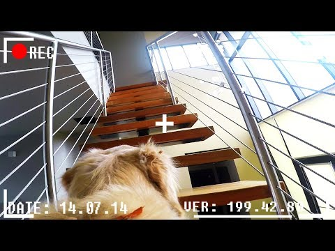 What do dogs do when they're home alone? *GOPRO SPYCAM FOOTA