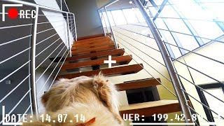 Video What do dogs do when they're home alone? *GOPRO SPYCAM FOOTAGE* download MP3, 3GP, MP4, WEBM, AVI, FLV Oktober 2017
