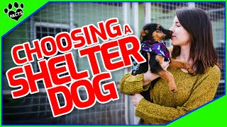 How To Choose A Shelter Dog