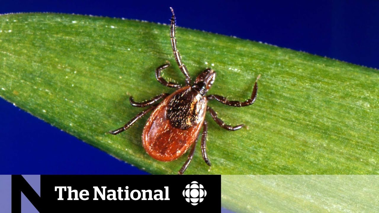 Ask the expert: With Lyme disease on the rise, here's how you can protect yourself