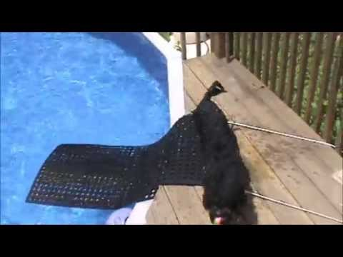 Diy Dog Ramp For Swimming Pool Youtube