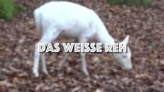DAS WEISSE REH - Kurzfilm 2017