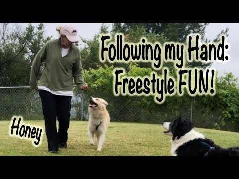 Follow my hand:  Building a connection with Tricks - Dog Training