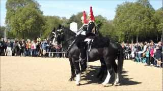 Changing the Guard - Horse behaving badly - Horse Guards Parade - Whitehall