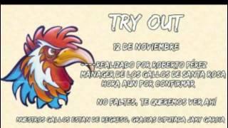 Try out... Para Gallos de Santa Rosa