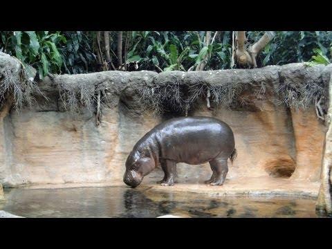 Chicago Lincoln Park Zoo walk HD