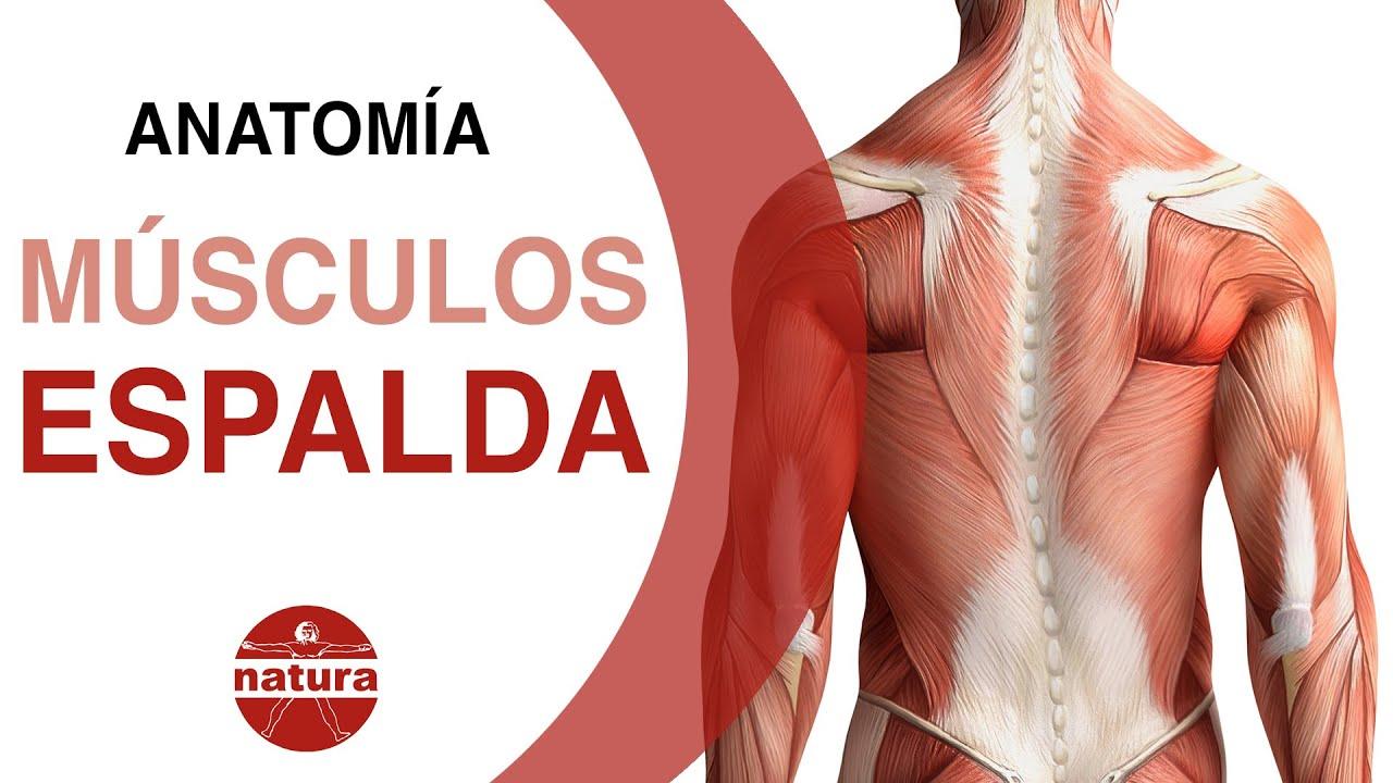 Clases de anatomia Los músculos de la espalda y del cuello NATURA ...