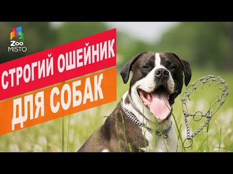 Строгий ошейник для собак | Обзор строгий ошейник для собак