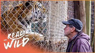 The Man With 200 Big Cats (Wildlife Documentary HD) | Predator Pets | Real Wild
