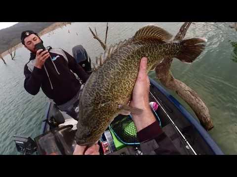 Burrinjuck Cod 70cm, 65cm & Dropped A Big Fish