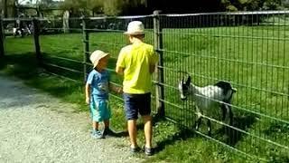 Мы в парке домашних животных в Германии