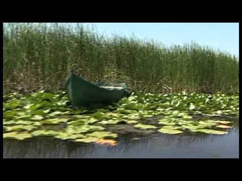 Sturgeons. Protect Danube's Treasure