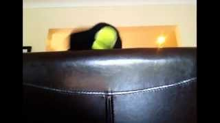 Talking Tennis Ball - Mya Hee