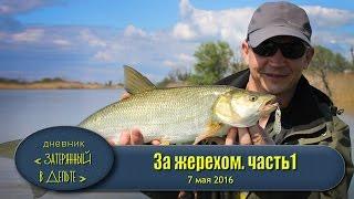 рыбалка на Волге. Астраханская дельта. Как поймать жереха