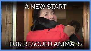 2018-gave-a-new-start-to-these-rescued-animals